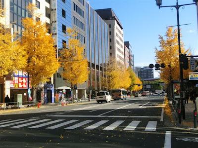 横浜市庁舎前のイチョウ並木
