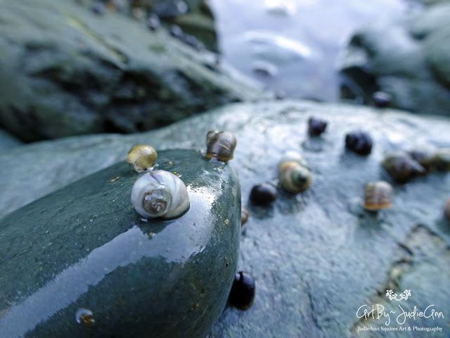 Colorful Sea Snails Photo