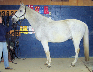 The Glorious Hoof Posture And Conformation