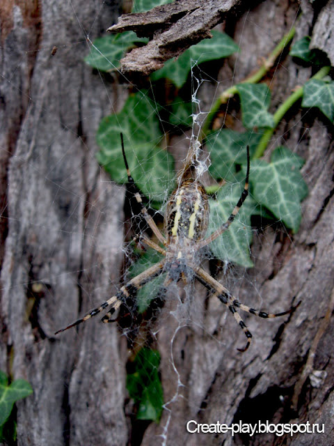 паук Абхазия