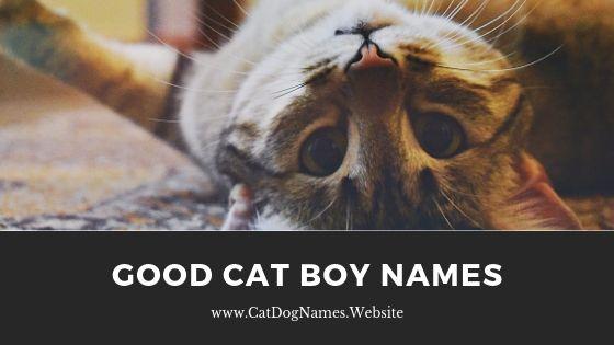 Good Cat Boy Names, cat names