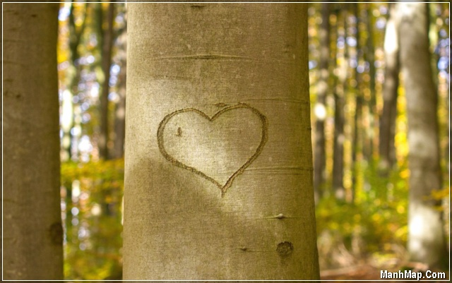 ảnh trái tim được khắc trên thân cây