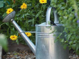 Contribuye a la conservación de polinizadores con un jardín en casa