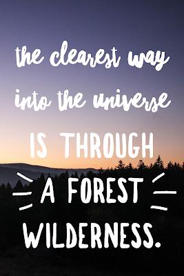 Die 50 besten Zitate zu den Themen Wald und Bäume | Waldzitate | Baumzitate | Naturzitate | Zitate-Wald | Inspirierende-Zitate