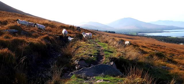 lampaat, kerry, vuoristomaisema, vaellusreitti irlanti