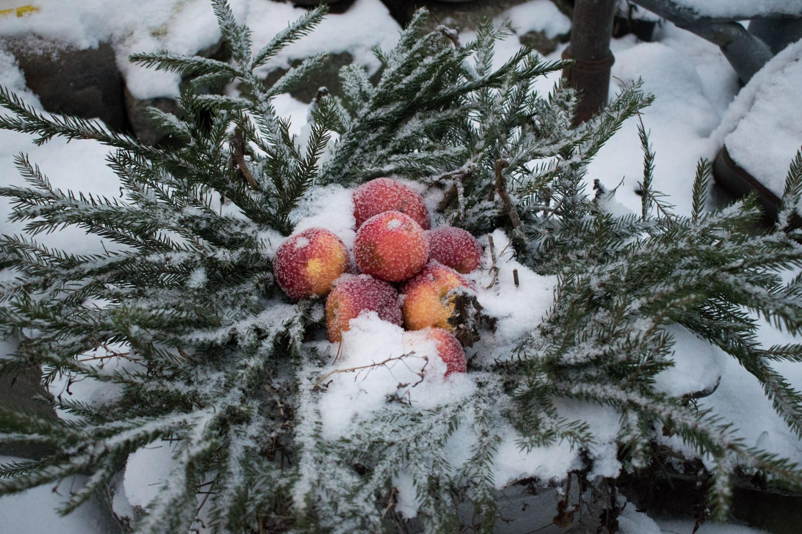Tidigare har jag inte varit någon vän av julbord (som barn åt jag bara  plommon och riven morot på julafton) e77702b379737