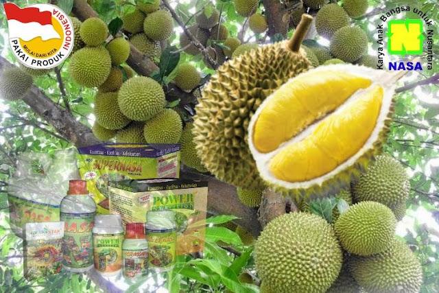 Teknis Budidaya Buah Durian