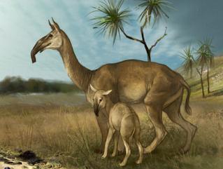 Il Macrauchenia, mammifero preistorico scoperto da Charles Darwing
