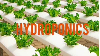 hydroponics,farming,hydroponic,how to hydroponic,hydroponics farming,hydroponic farming,hydroponic system,hydroponics for beginners,hydroponics at home,vertical farming,hydroponic gardening,how to do hydroponics farming,how to hydroponic farming,hydroponics farming in india,urban farming,what is hydroponics,how to,hydroponics how it works,vertical hydroponics,hydroponics system,how to hydroponics,hydroponics systems