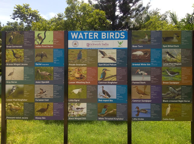 List of Water Birds Some of which call Madiwala Lake Their Home
