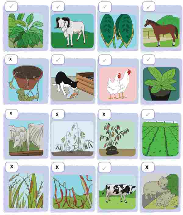 Hewan dan Tumbuhan