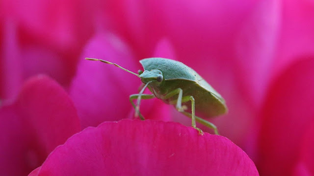How to Get Rid Of Stink Bugs at Home