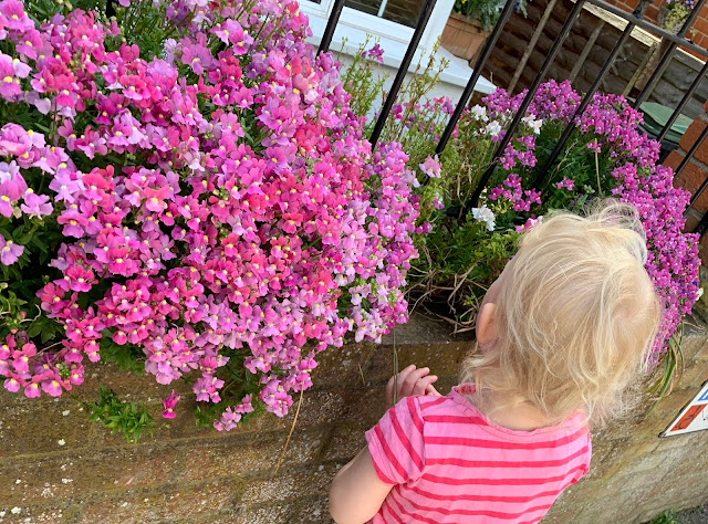 A toddler stopped outside a house looking at the flowers in their front garden