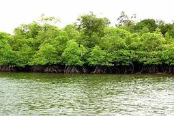 Pengertian Lingkungan Biotik dan Abiotik Beserta Contohnya