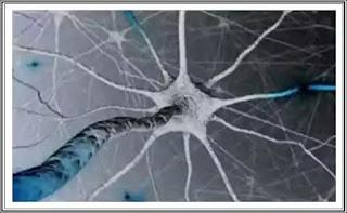 exista celule din creier traiesc si dupa ce ai murit