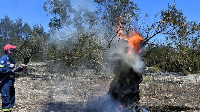 Υπό μερικό έλεγχο η φωτιά στα Μέθανα - Κάηκαν 800 στρέμματα αγροτοδασικής έκτασης