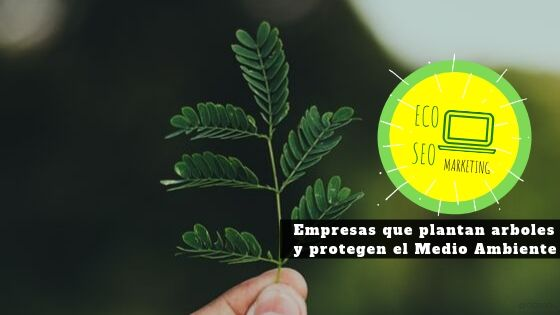 Empresas que protegen el medio ambiente, planta arboles y venden más con ECO SEO Green Marketing