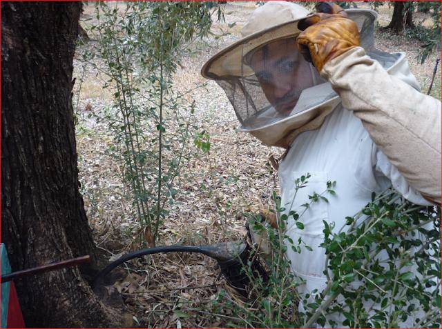 Αφιέρωμα: μελισσοθεραπεία