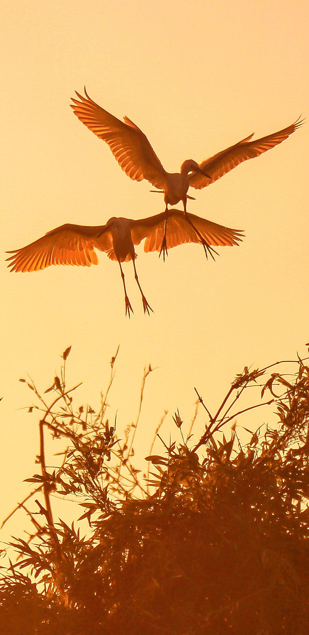 Amazing photo of storks at sunset.