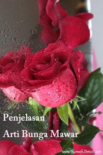 Arti Bunga Mawar Menurut Jenis, Warna, Jumlah, dan Kondisi Bunga
