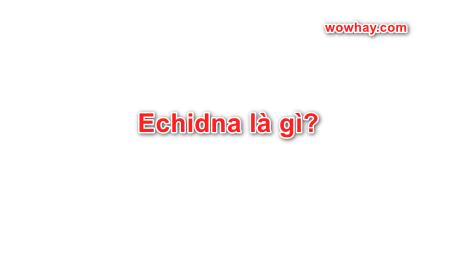 Echidna là gì? Những điều thú vị nhất về Echidna bạn chưa biết