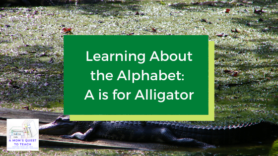 Text: Learning about the Letter A: A is for Alligator; photo of an alligator; A Mom's Quest to Teach Logo
