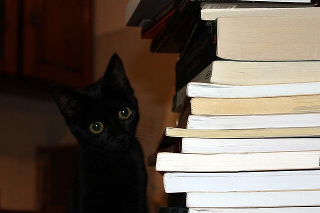 cb 3 - 10 Gatos pretos lendo livros