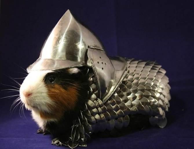 guinea pig armor suit