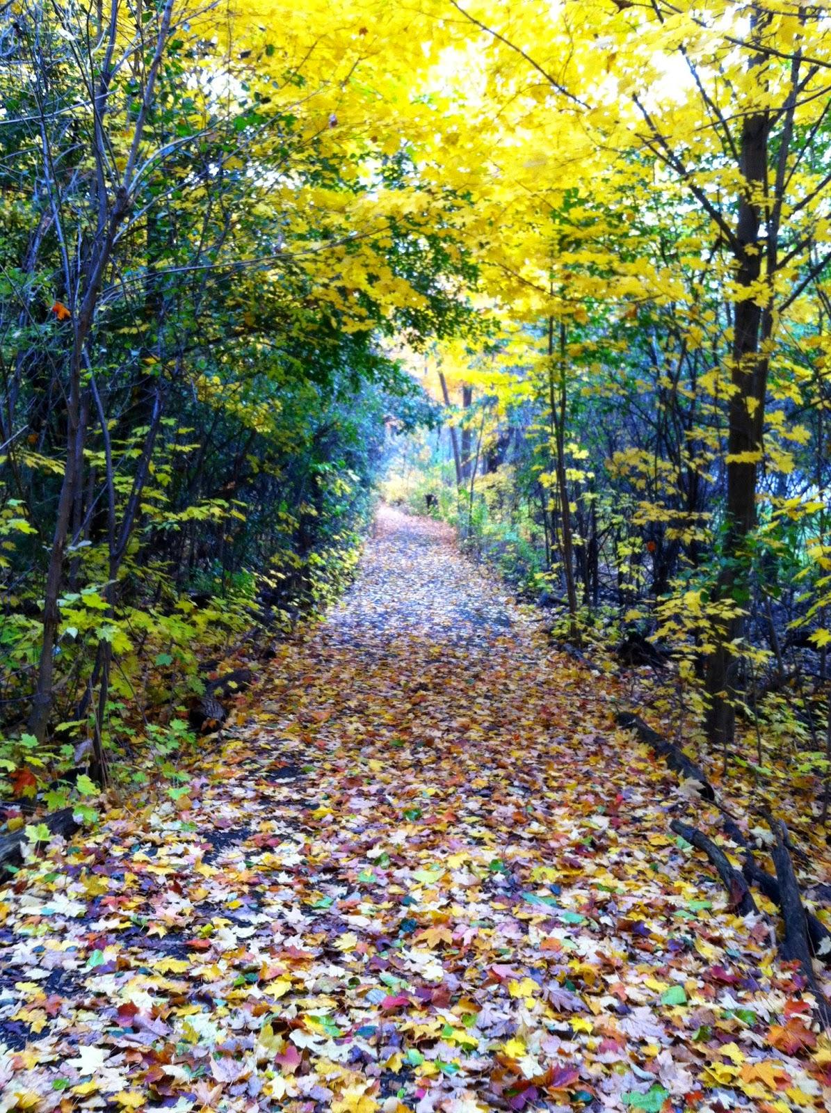 Beautiful November walk