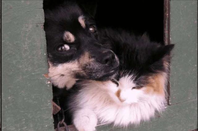 Кошка и собака выживали на даче без помощи людей, пока их не обнаружили и не спасли