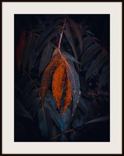 plakat, plakat z liściem, plakat z liściem w kroplach, plakat darkmood, plakat z liśćmi, plakat w kroplach deszczu, plakat roślinny, plakat A3, plakat pionowy