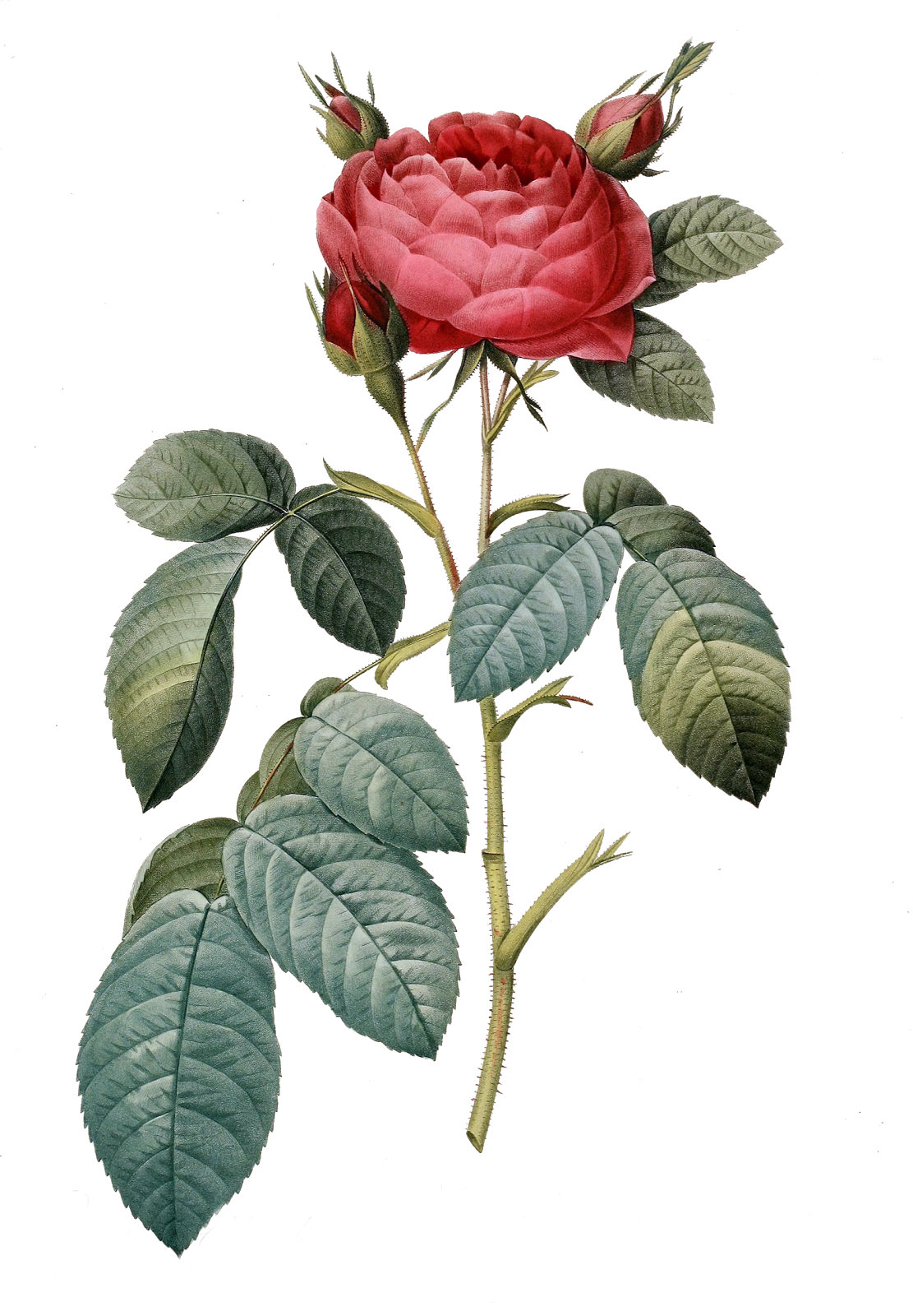 Tangle's Treasures: Gorgeous vintage Rose Clipart freebie