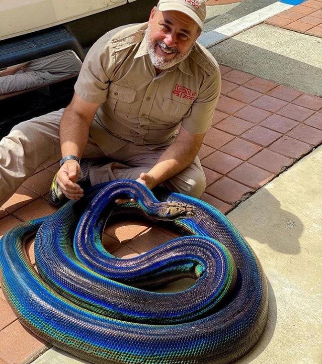 Colorful python