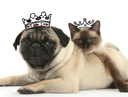 noble names for dogs and cats