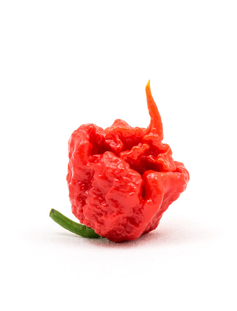 Trinidad moruga scorpion close up