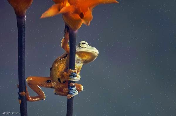 amazing frogs photos