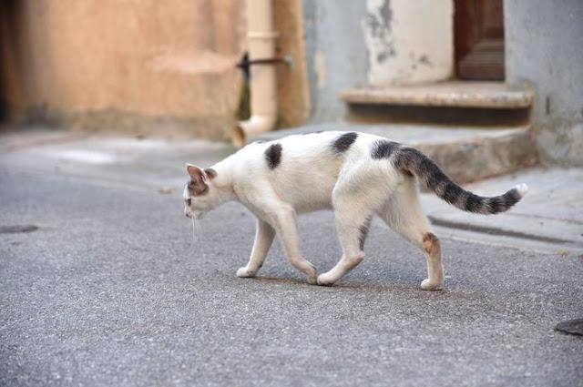 Cara Menjinakkan Kucing Liar