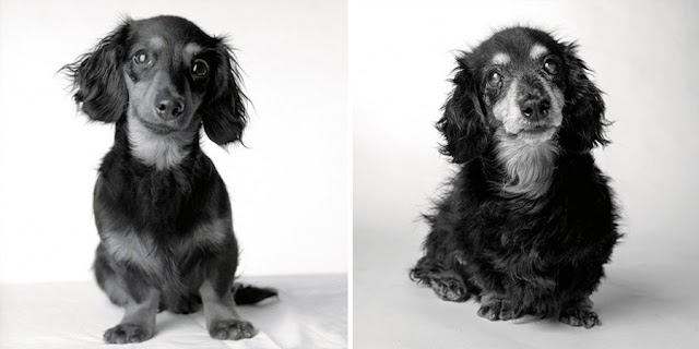 perra Lily antes y después
