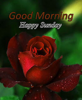 New Good Morning 4k Full HD Images Download For Daily%2B56