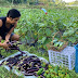 Small entrepreneurs in Bicol foster social responsibility amid crisis