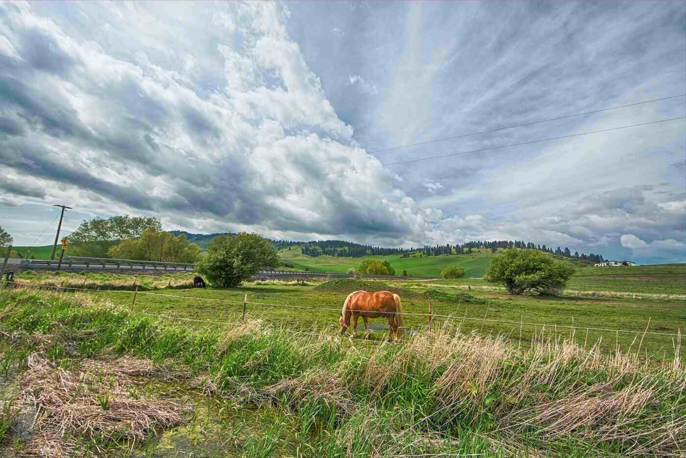 horse in field with wire fencing - types of horse fencing