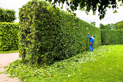 Best Hedge Trimmer With Extension Pole