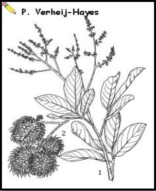 47 Sketsa Bunga Tidak Sempurna