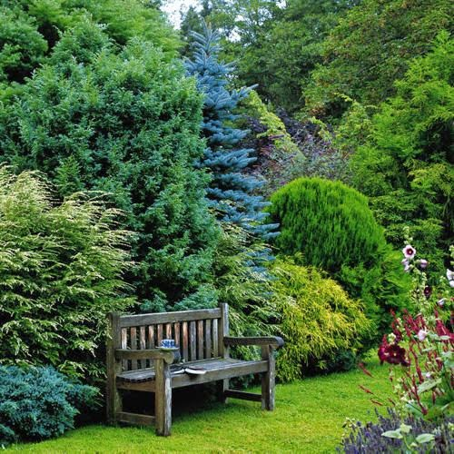 Small Trees For Borders: The Garden: Conifer Gardens