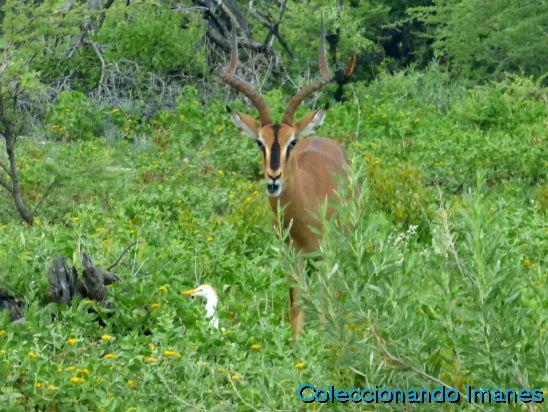 Animales en Etosha