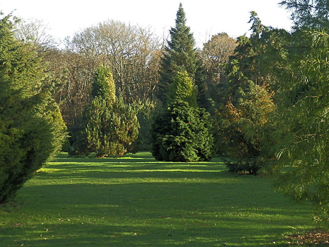 Selection of trees at Pinetum Gardens St.Austell