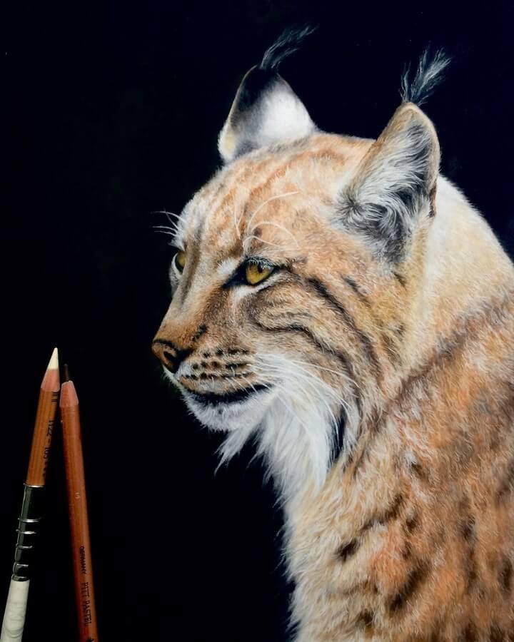12-Lynx-Julia-M-www-designstack-co