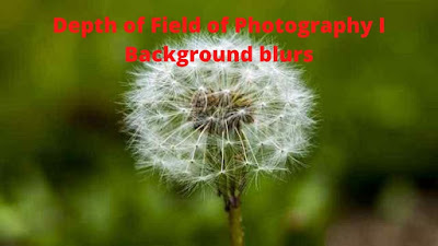 Depth of Field of Photography for Beginners I Background blurs