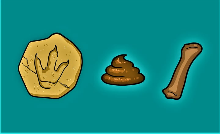 3 different types of fossils: rocks, bones and dung that have become fossils over time.