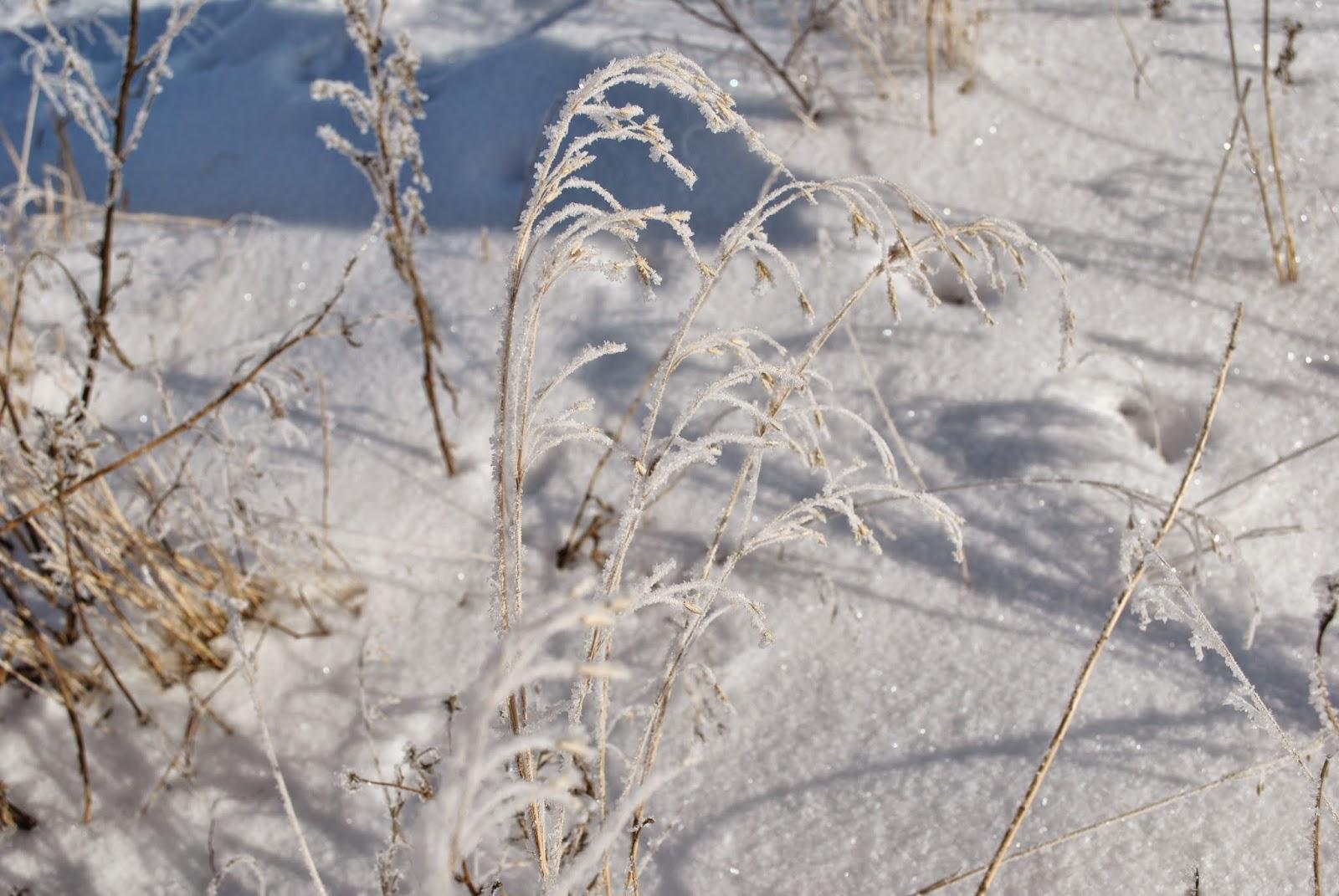 чудесная зимняя зима, картина зима